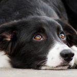 alsa-hundewelt-hund