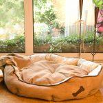 schecker-hunde-sofa-soft-line